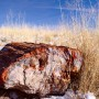 Fossilized_wood_at_Petrified_Forest